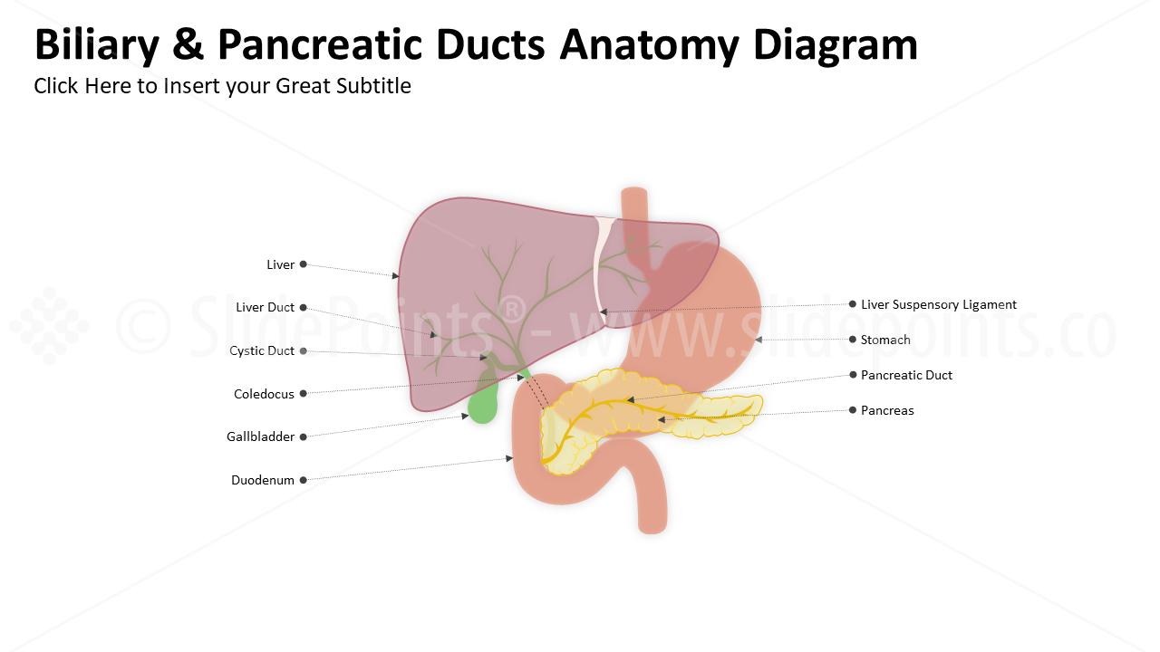 Berühmt Anatomie Der Nase Ppt Bilder - Anatomie Ideen - finotti.info
