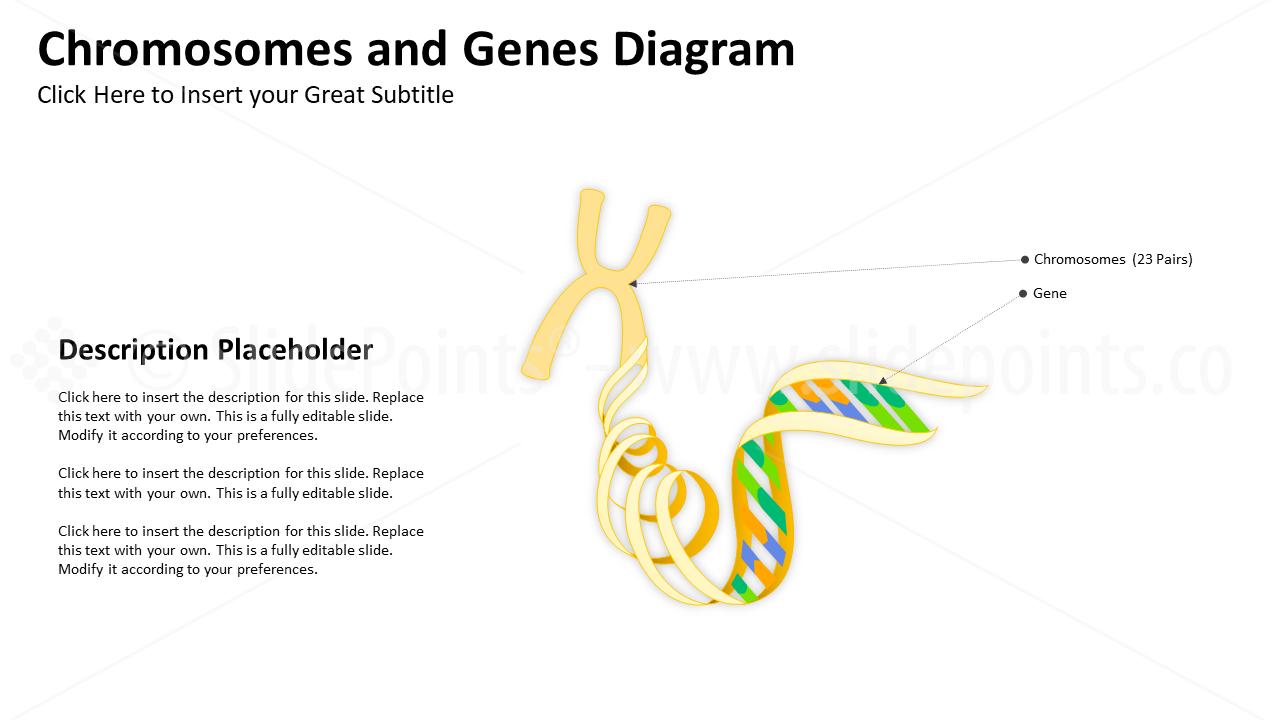 Embryology Biology Powerpoint Slidepoints